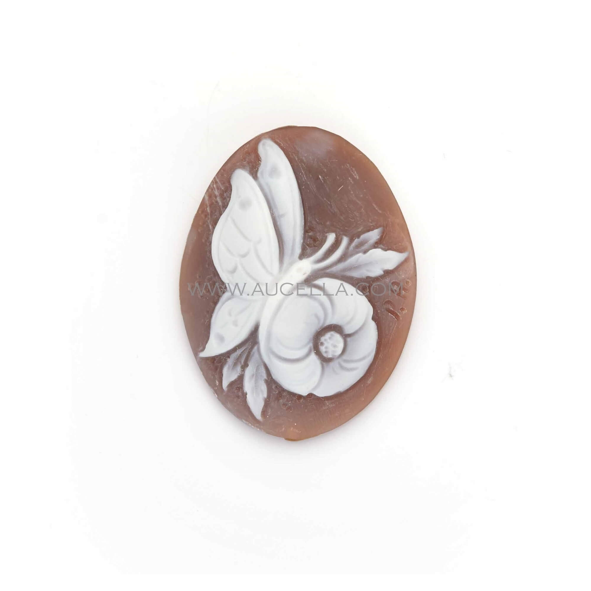 Cameo butterfly